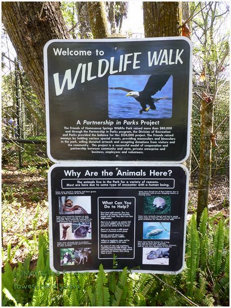 Wildlife walk at Homosassa Springs Wildlife Park