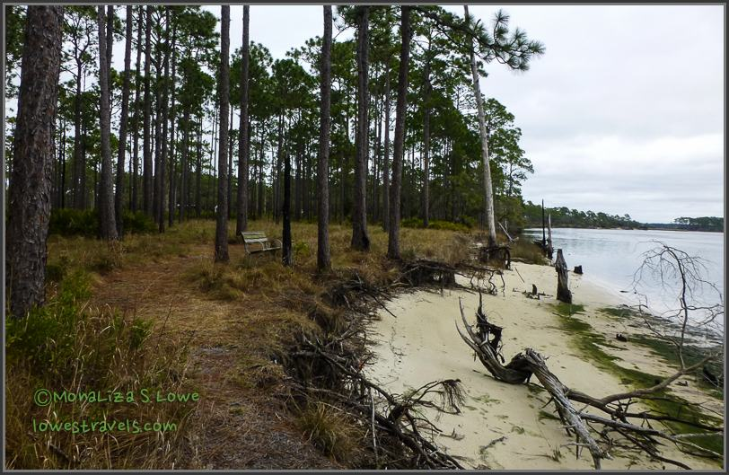 Ochlockonee River Trail
