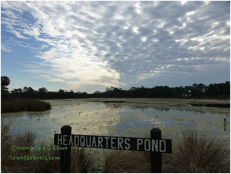 Headquarters Pond, ST Marks NWR