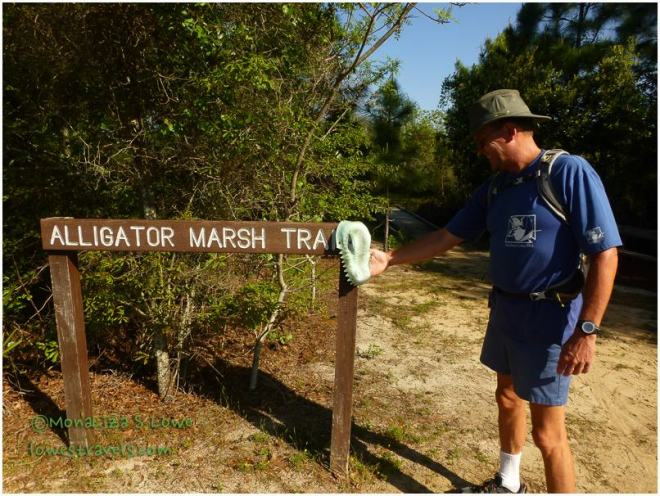 Alligator  Marsh Trail, Gulf State Park