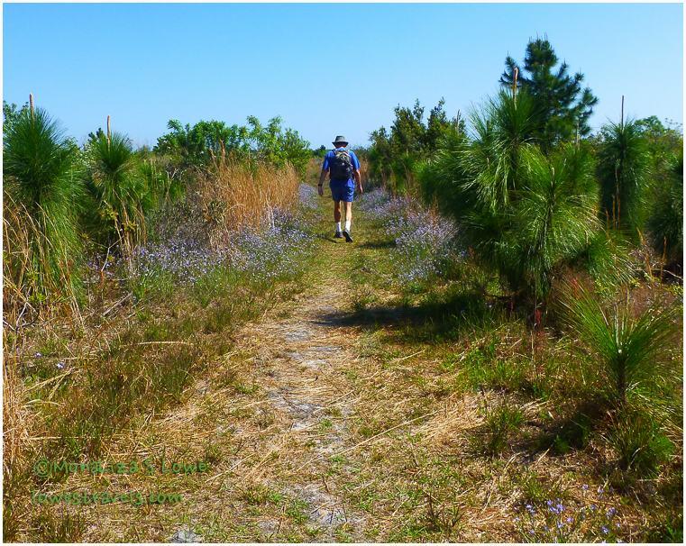 Bear Creek Trail, Gulf State Park