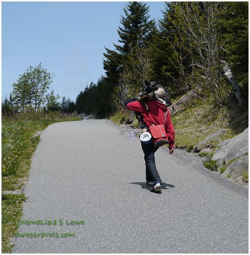 Clingmans Dome Trail