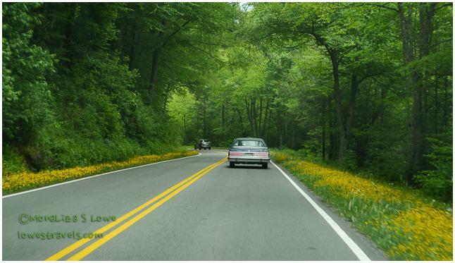 Highway 441 GSMNP