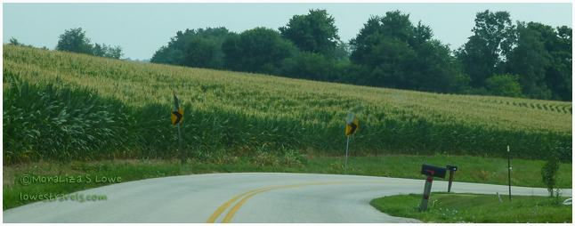 Corn Farms