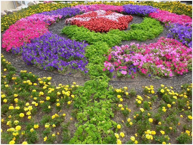 Beauty and the Beast Rose Quilt Garden, Elkhart