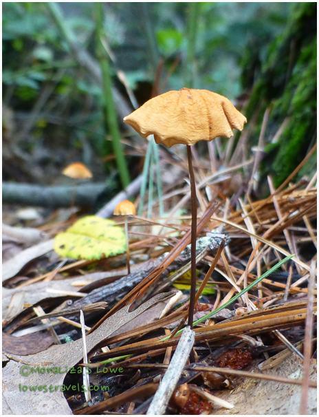 Horse hair fungus