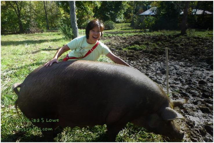 Pastured Pig at Mason Creek Farm