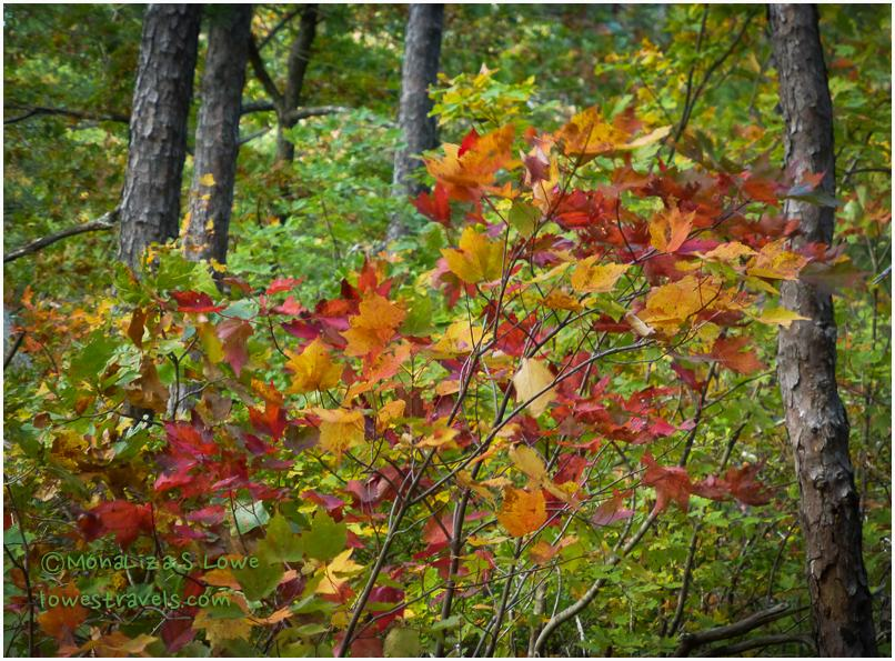 Fall Leaves at Mountain Top Trail