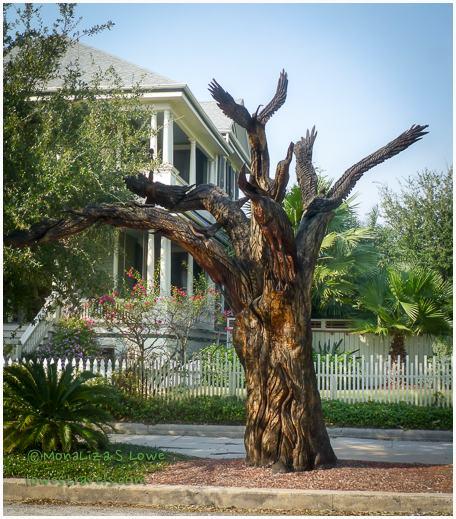 Birds of Galveston