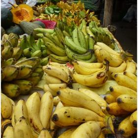 Yum! 5 varieties of banana