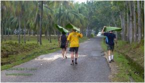Banana Leaves for umbrella