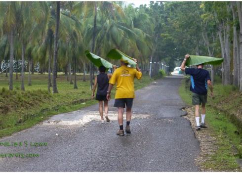 Banana Leaves for umbrella