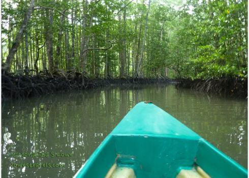 Mangrove Paddle Tour