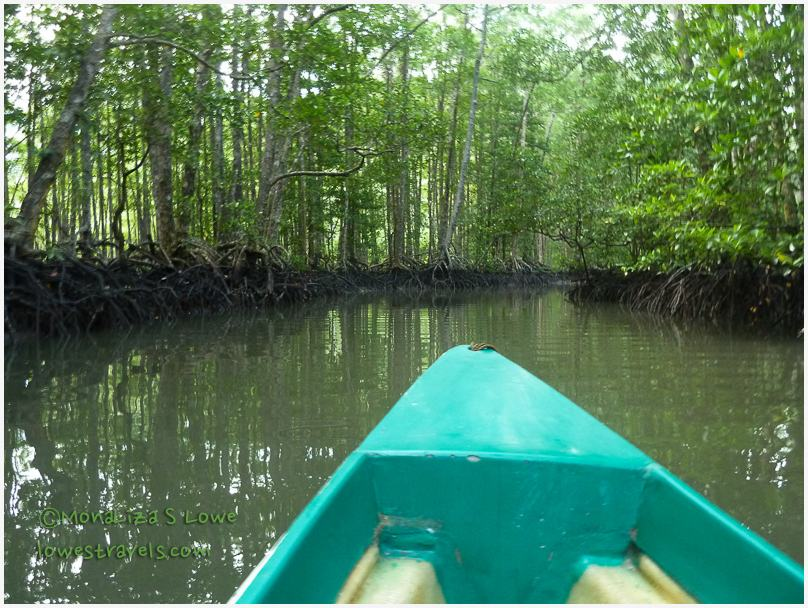 Mangrove Paddle Tour, Sabang Palawan