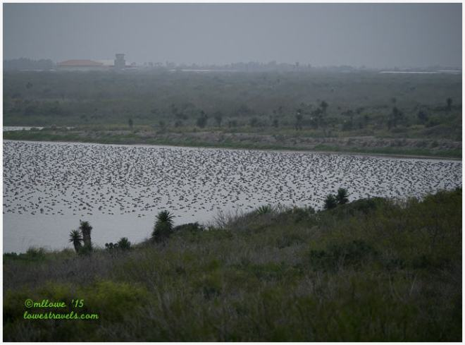 Laguna Atascosa NWR