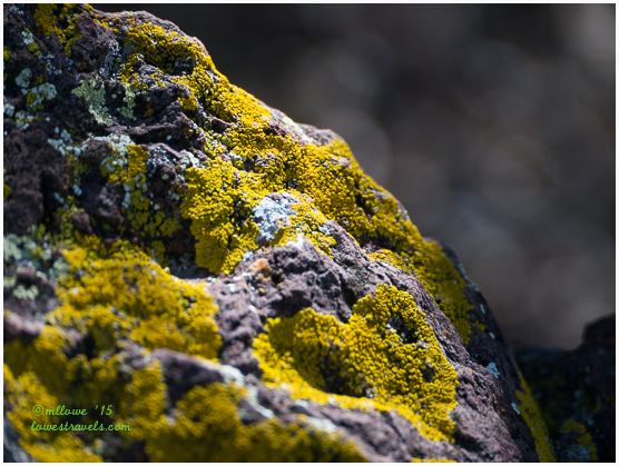 Lichens on rock, Lost Mine Trail