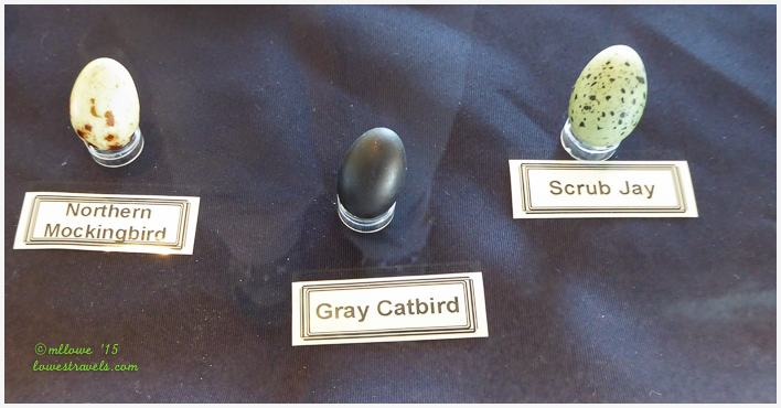 Bird Egg Replicas