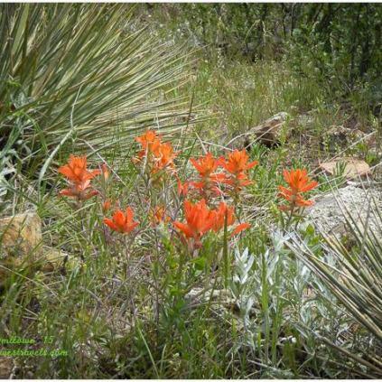 Many beautiful wildflowers here