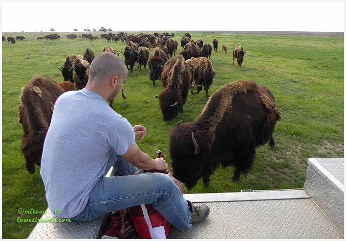 Duff Buffalo Ranch