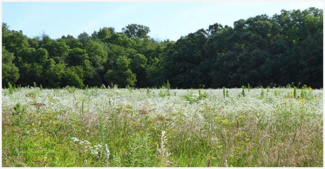 Lime Creek Nature Park