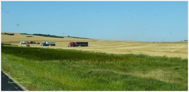 Wheat Harvesting in North Dakota