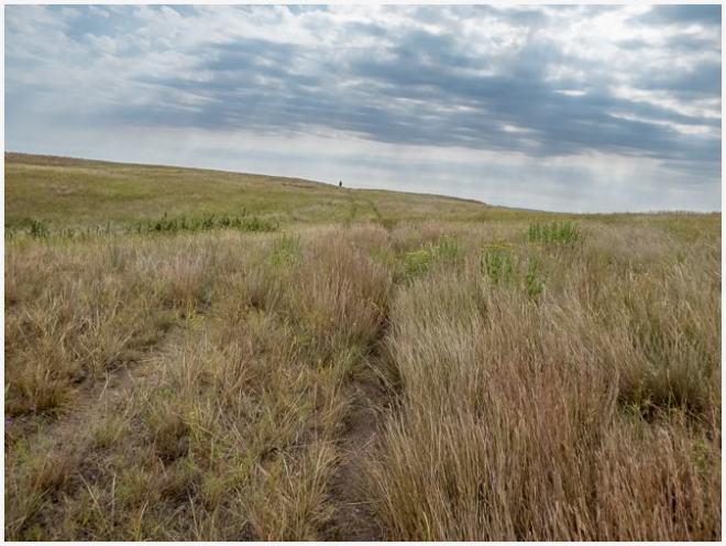 Theodore Roosevelt Wilderness