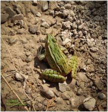 A cute frog...