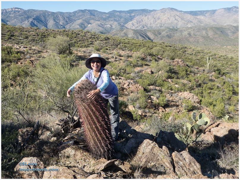 Compass Barrel Cactus