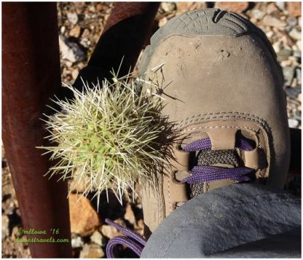 Jumping Cholla on boots