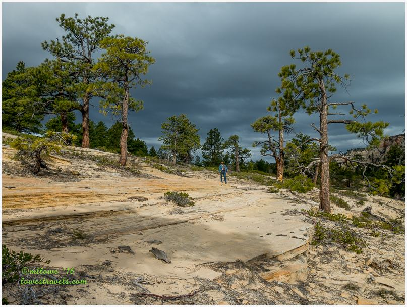 Northgate Peak Trail