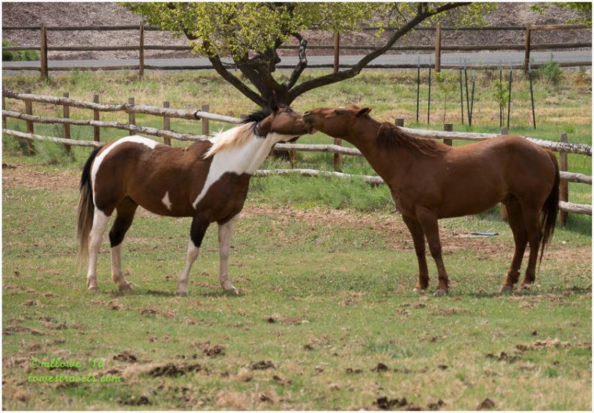 Necking horses