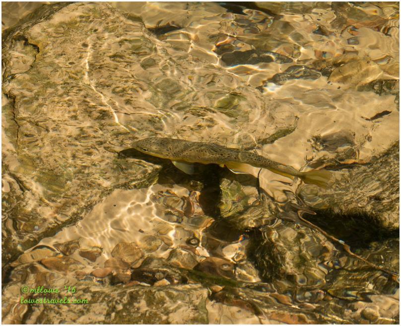 Lower Calf Creek