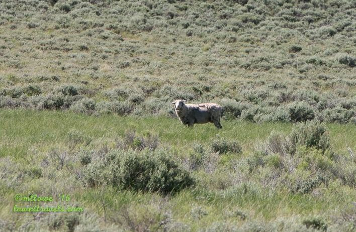 Wild Horse Scenic Loop