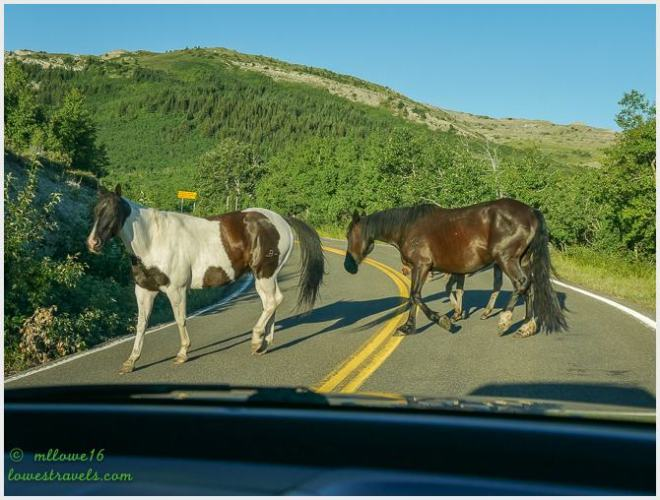 Ferocious local horses on Highway 49