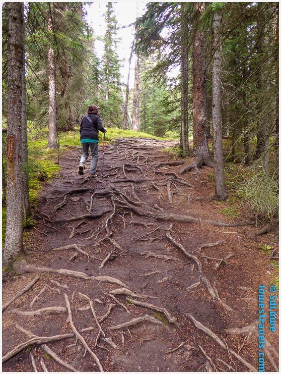 Wilcox Trail