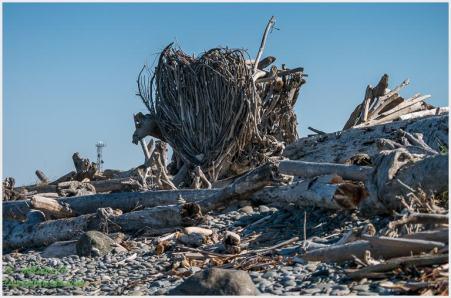 Wooden Heart made of driftwoods
