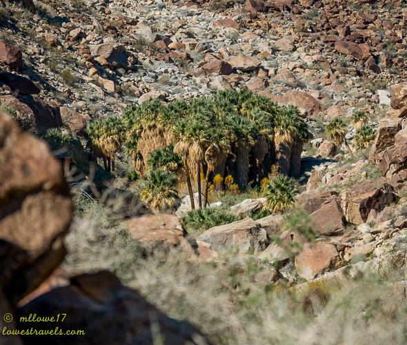 Borrego Palm Canyon Trail