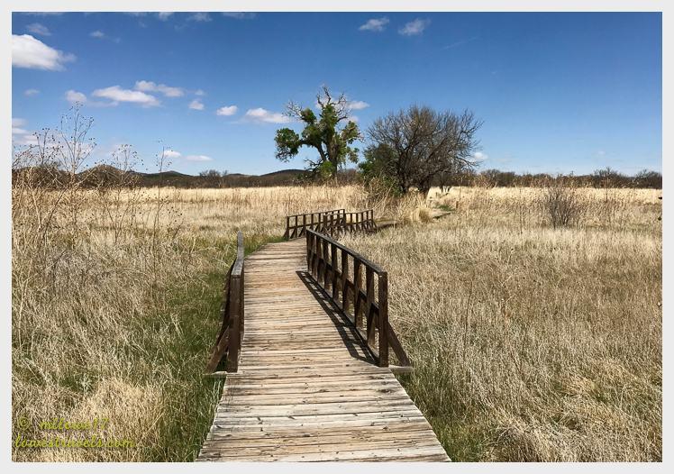 Arvivaca Trail