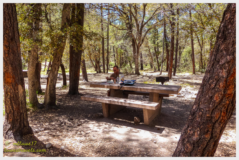 Picnic under pine trees