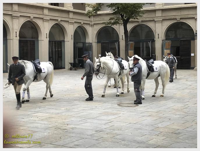 A Lippizaner horse
