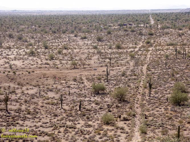 Mule Deer Trail
