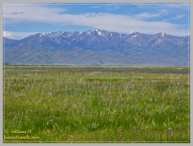 Camas Centennial Marsh