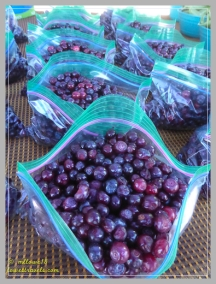 Huckleberries were in season!