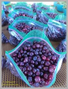 Huckleberries were in season!