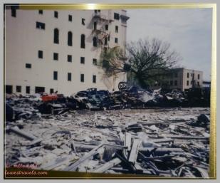 Elm tree after the blast
