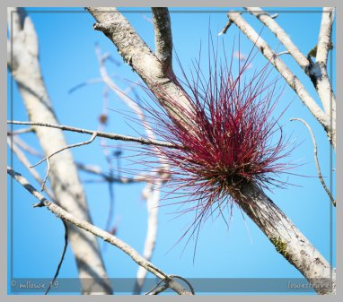 Air plants get food from air, sun and water