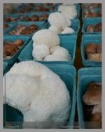 Unusual Shitake Sponge Mushroom