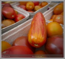 An elongated tomato
