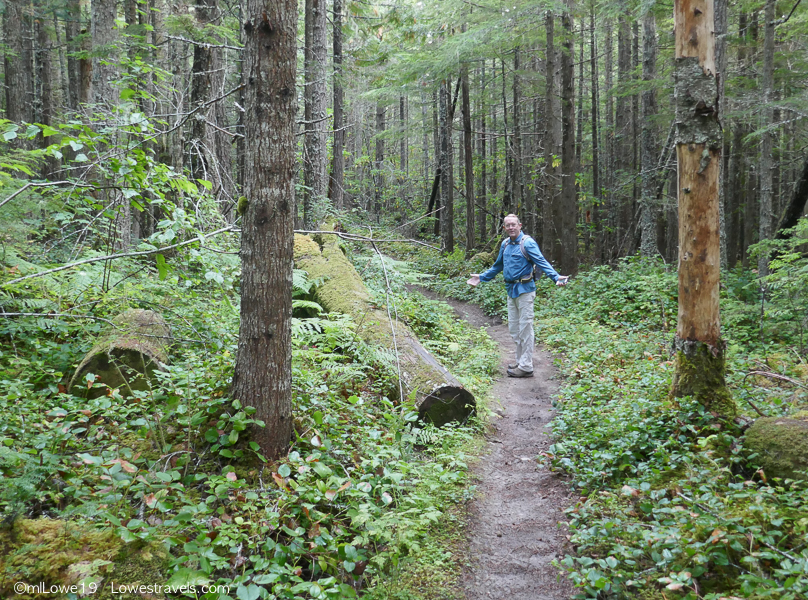 What's not to like on this trail, a forest filled with lush ferns and moss!