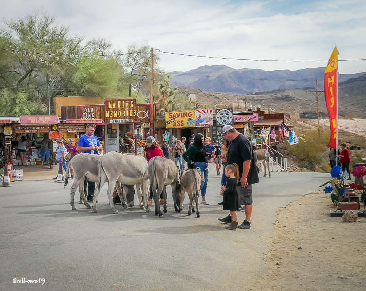 Burros love tourists who just might bring a treat for them